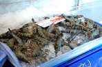 XL Green Tiger Prawns