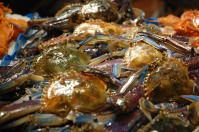 Blue Swimmer Crabs are best steamed and served with minced garlic and hot oil.