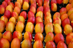 Queensland mangoes